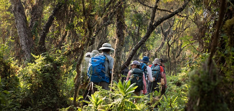 Hiking-through-the-rain-forests-Western-Approach-Route