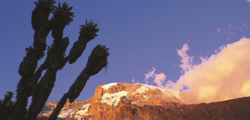 Kilimanjaro at sunset from the Barranco Valley. Tanzania. Assign