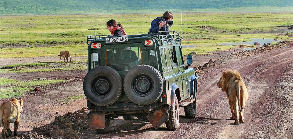 Observing-the-Lions-on-jeep-safari-Serengeti-National-Park-Tanzania